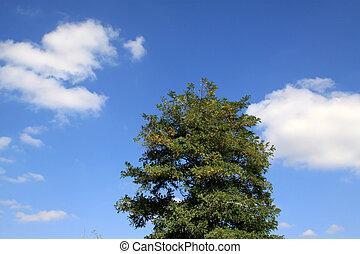 árvores verdes, sob, a, céu azul
