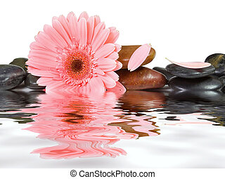 ásványvízforrás, csiszol, és, rózsaszín százszorszép, képben...