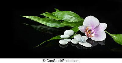 ásványvízforrás, halk élet, noha, zen, megkövez, orhidea, virág, és, bambusz, helyett, transzparens