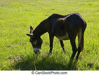 âne, herbe, manger