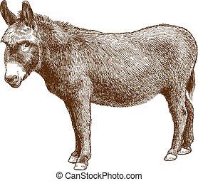 âne, illustration, gravure, burro