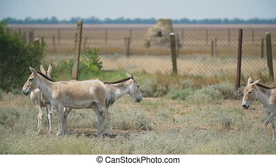 ânes, réserve