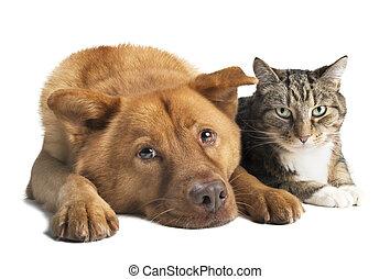 ângulo largo, cão, junto, gato