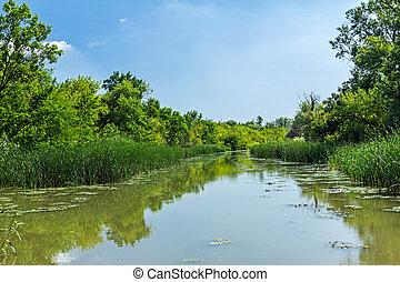 ângulo largo, vista, ligado, rio, com, reflexão, de, floresta, em, a, water.