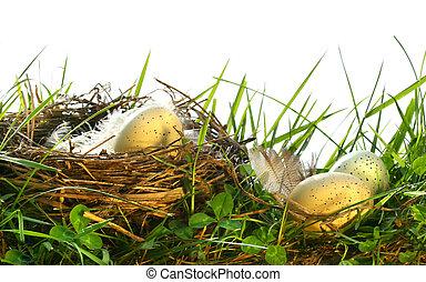 ägg, in, den, långt gräs, med, bygga bo