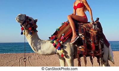 ägypten, m�dchen, kamel, tourismus, blond, zurück, reiten