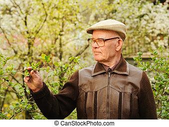 äldre bemanna, arbete, in, trädgård