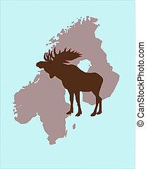 älg, med, jul, lock, på, dens, hjorthorn, in, skandinavien