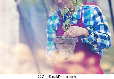ältere frau, pflanzen, sämlinge