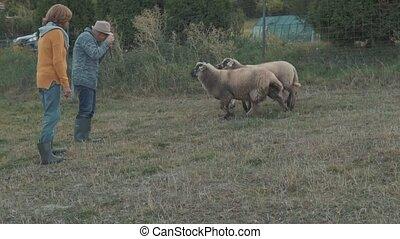 ältere paare, aufnahme nehmend, auf, der, farm.