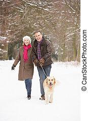ältere paare, laufenden hund, durch, verschneiter , waldland
