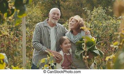 ältere paare, mit, grandaughter, gartenarbeit, in, der, hinterhof, kleingarten