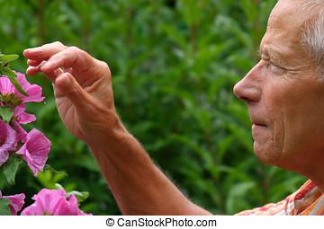 älterer mann, gartenarbeit