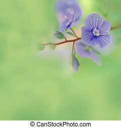 äng, blå blommar