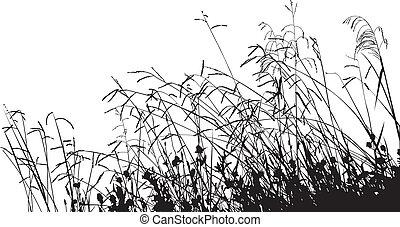 äng, gräs, silhuett