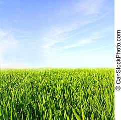 äng, med, grönt gräs, och blåa, sky, med, skyn