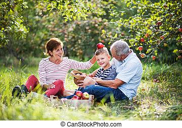 äpple, sonson, fruktträdgård, par, liten, senior, fun., ha
