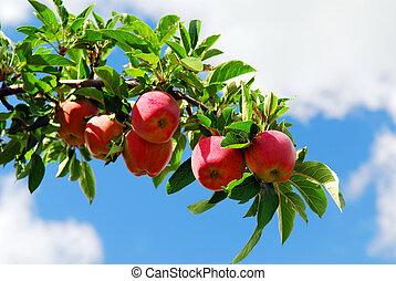 äpplen, en filial