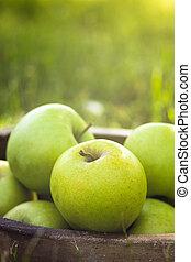äpplen, in, gräs