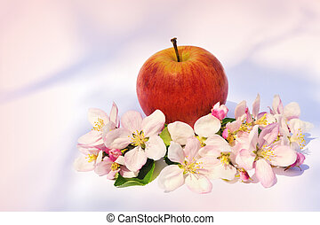äpplen, och, äpple träd, blomstringar