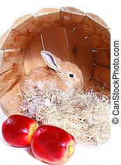 äpplen, och, kanin