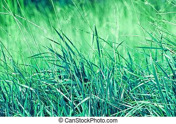 årgång, bakgrund, grassline