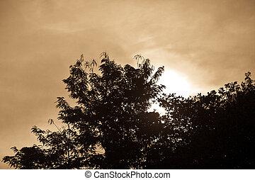 årgång, baldakin, grunge, struktur, träd