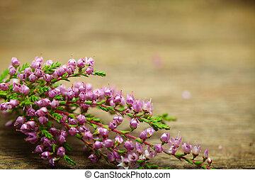 Årgång, Blomstrar,  -, bakgrund, makro