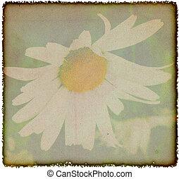 Årgång, Blomstrar, Kamomill, bakgrund