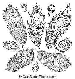 årgång, fjäder, vektor, set., hand-drawn, illustration.