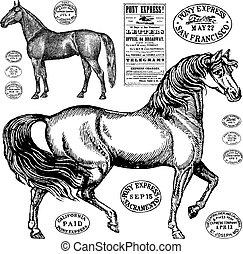 årgång, häst, vektor, grafik