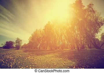 årgång, nature., solig, träd, parkera, maskroser, fjäder