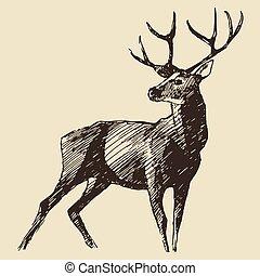 årgång, vektor, hjort, gravyr, illustration