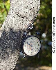 Årgång, vit, hängande, träd, klocka