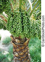årtal frukt