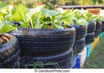 återanvända, av, däck, använd, in, organisk, grönsak,...