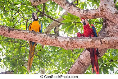 écarlate, blue-and-yellow, macaw., macaw