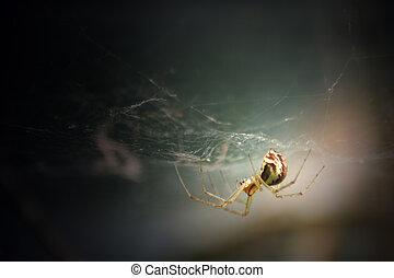 éclairé, araignés