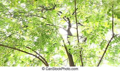 éclat, backgr, soleil, feuilles, vert, sous