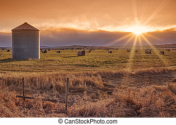 éclater, soleil, prairie, coucher soleil