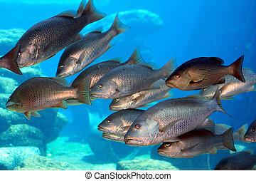 école, fish