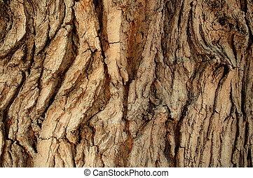 écorce, arbre