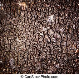 écorce, arbre, fond