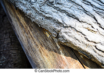 écorce, arbre, fond, texture
