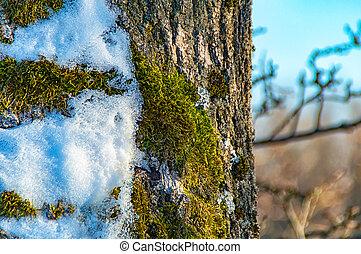 écorce, arbre, neige, mousse