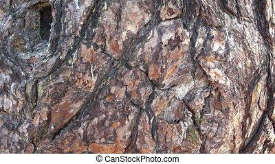 écorce, arbre, texture, bois