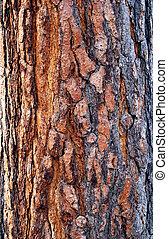 écorce, arbre, vieux, texture