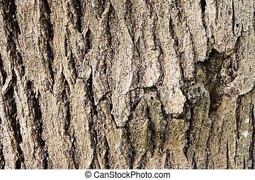 écorce, arbres