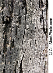 écorce, arbres, plus vieux