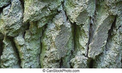 écorce, chêne, arbre, mûrir, texture, surface